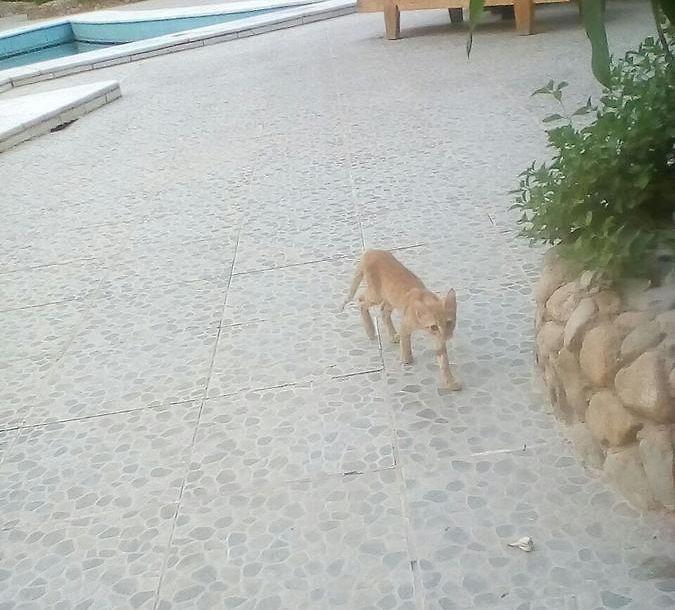 Residenz Suleder 1 Hurghada – Book Online – Hurghada Stay